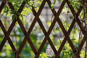 Trellis and Vines